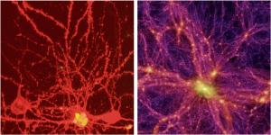 Neurons and galaxy clusters have similar structures.